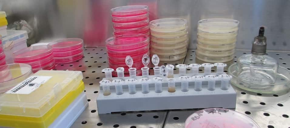 Cell culture for newbies • Hemocytometer
