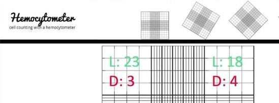 hemocytometer calculation tutorial
