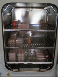 Cell culture incubator with flasks