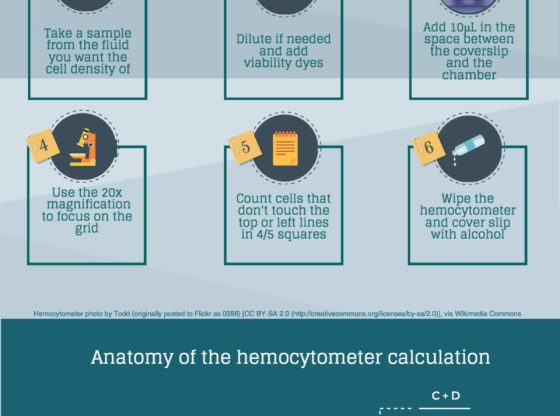 Counting cells with a hemocytometer in 6 simple steps